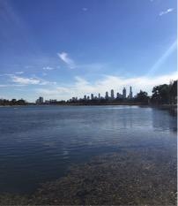 Million Paws Walk Melbourne